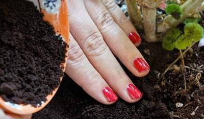 Fertilizantes ecológicos caseros nitrogeno