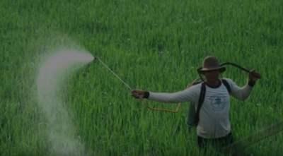 contaminación de los alimentos concepto