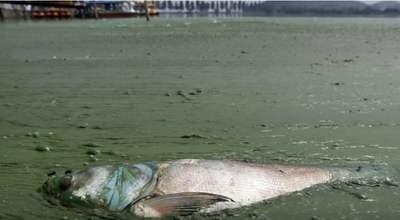 consecuencias de la contaminación de los ríos
