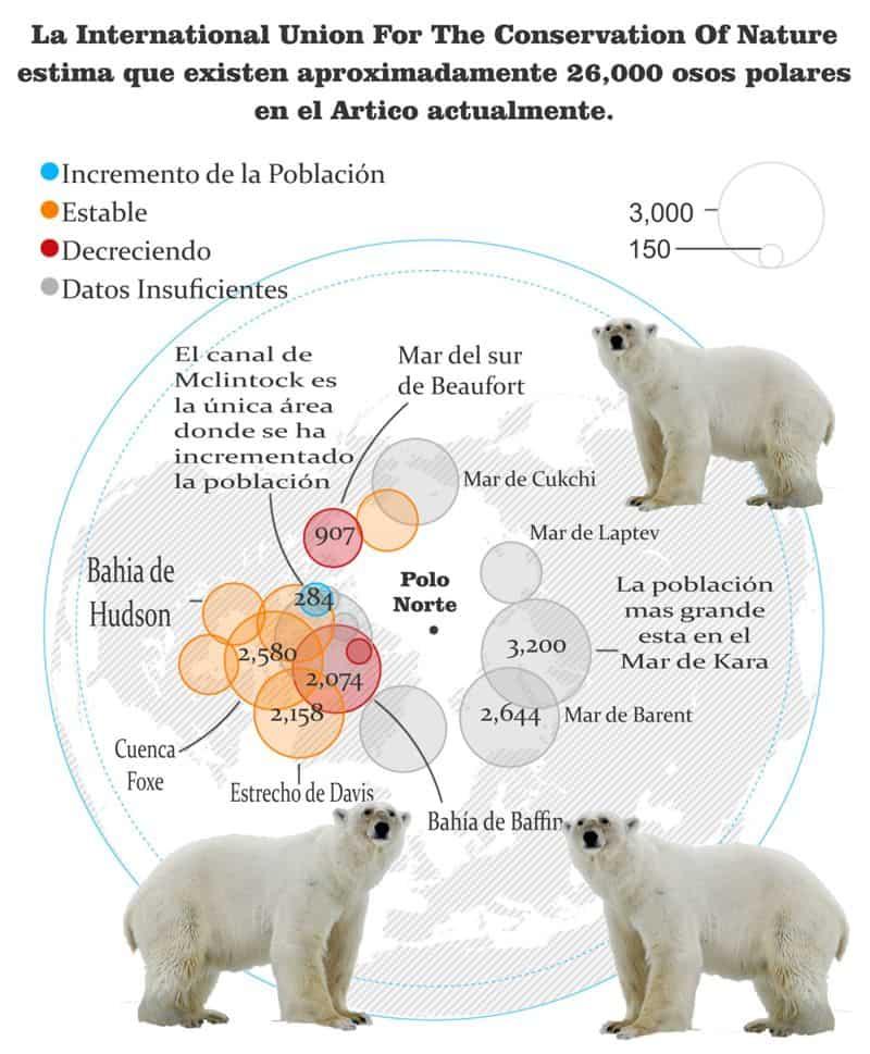 por que esta el oso polar en peligro de extinción
