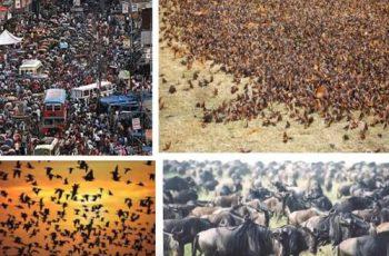 enfoque de la ecología de las poblaciones