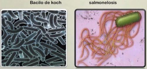 fundamentos de la ecología microbiana