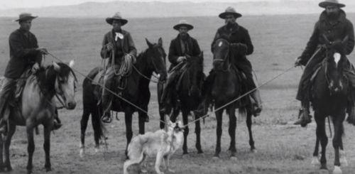 lobo gris mexicano en peligro de extinción consecuancias
