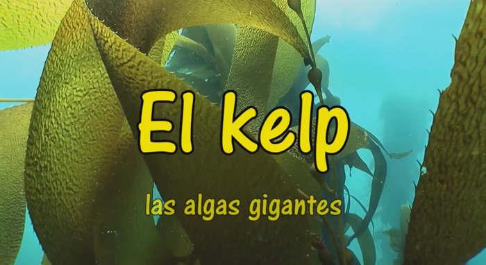 hipotiroidismo remedios naturales kelp